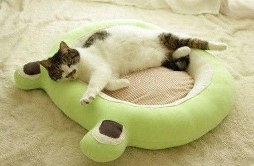 Como hacer camas para gatos paso a paso for Como hacer una cama japonesa paso a paso