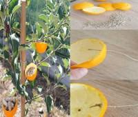 Como hacer un comedor para aves con cascaras de naranja