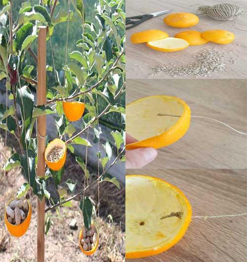 comedor para aves con cascaras de naranja