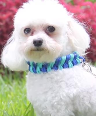 collar-personalizado-para-perros1